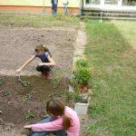 grundschule-bloensdorf-ag-schulgarten (2)